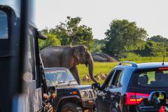 Sri-Lanka-73