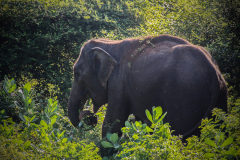 Sri-Lanka-76